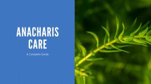 ANACHARIS CARE