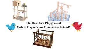 Best Bird Playground