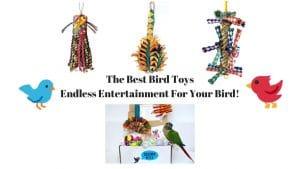 Best Bird Toys