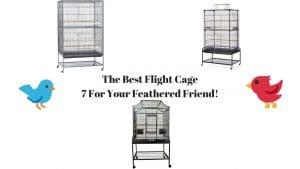 Best Flight Cage