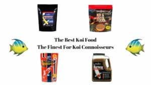 Best Koi Food