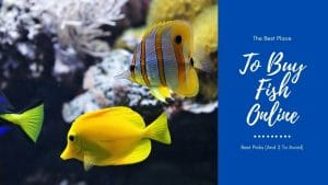 Best Place To Buy Fish Online
