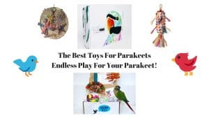 Best Toys For Parakeets