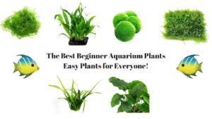 Best Beginner Aquarium Plants