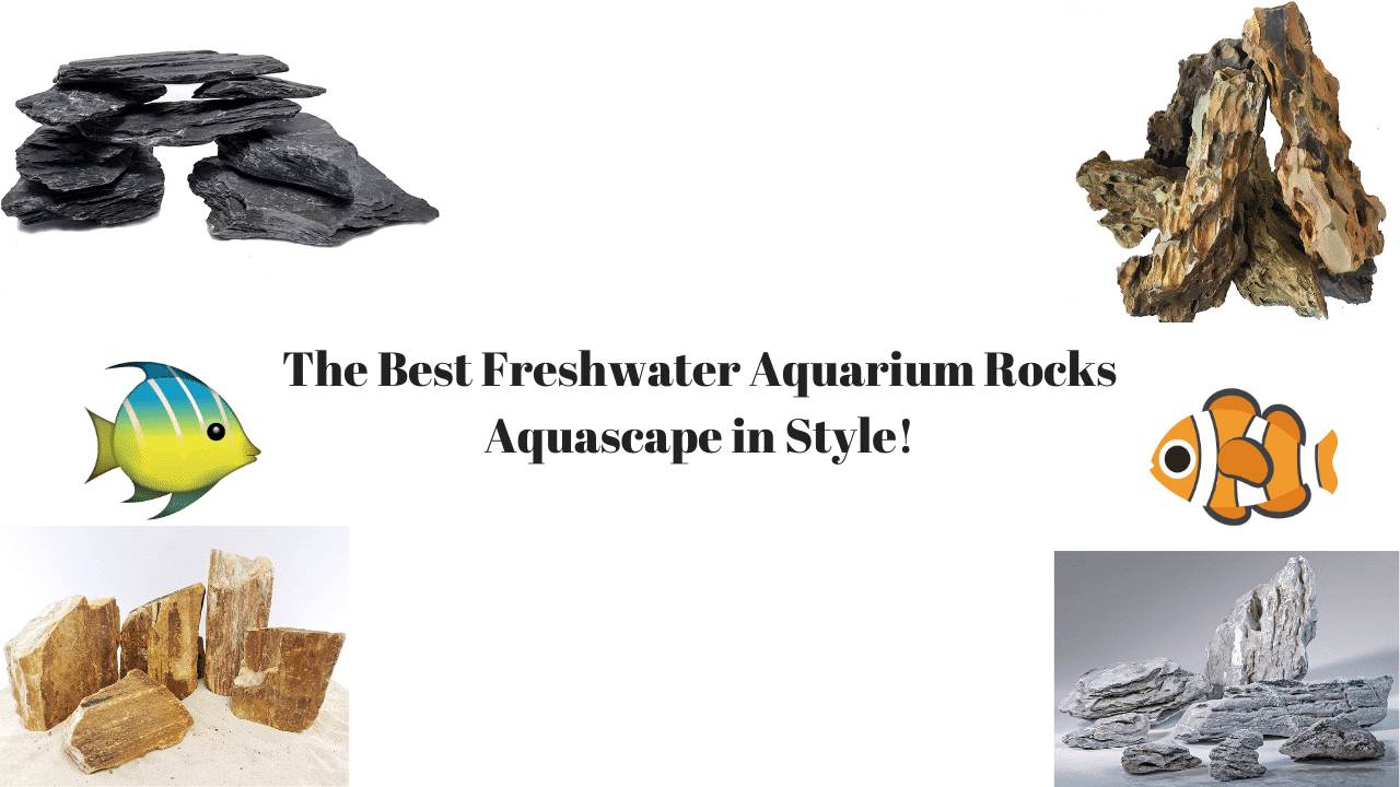 The Best Rocks For Freshwater Aquarium Aquascape In Style