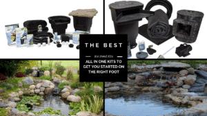 Best Koi Pond Kits