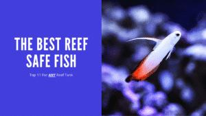 Best Reef Safe Fish