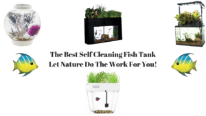 Best Self Cleaning Fish Tank