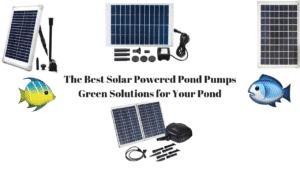 Best Solar Powered Pond Pump
