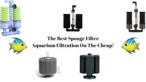 Best Sponge Filter