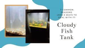 Cloudy Fish Tank