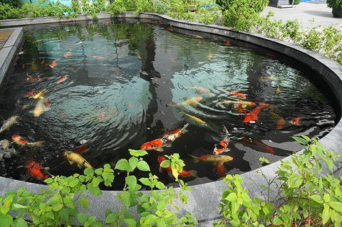 DIY Garden Pond Maintenance
