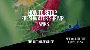 Freshwater Shrimp Tank