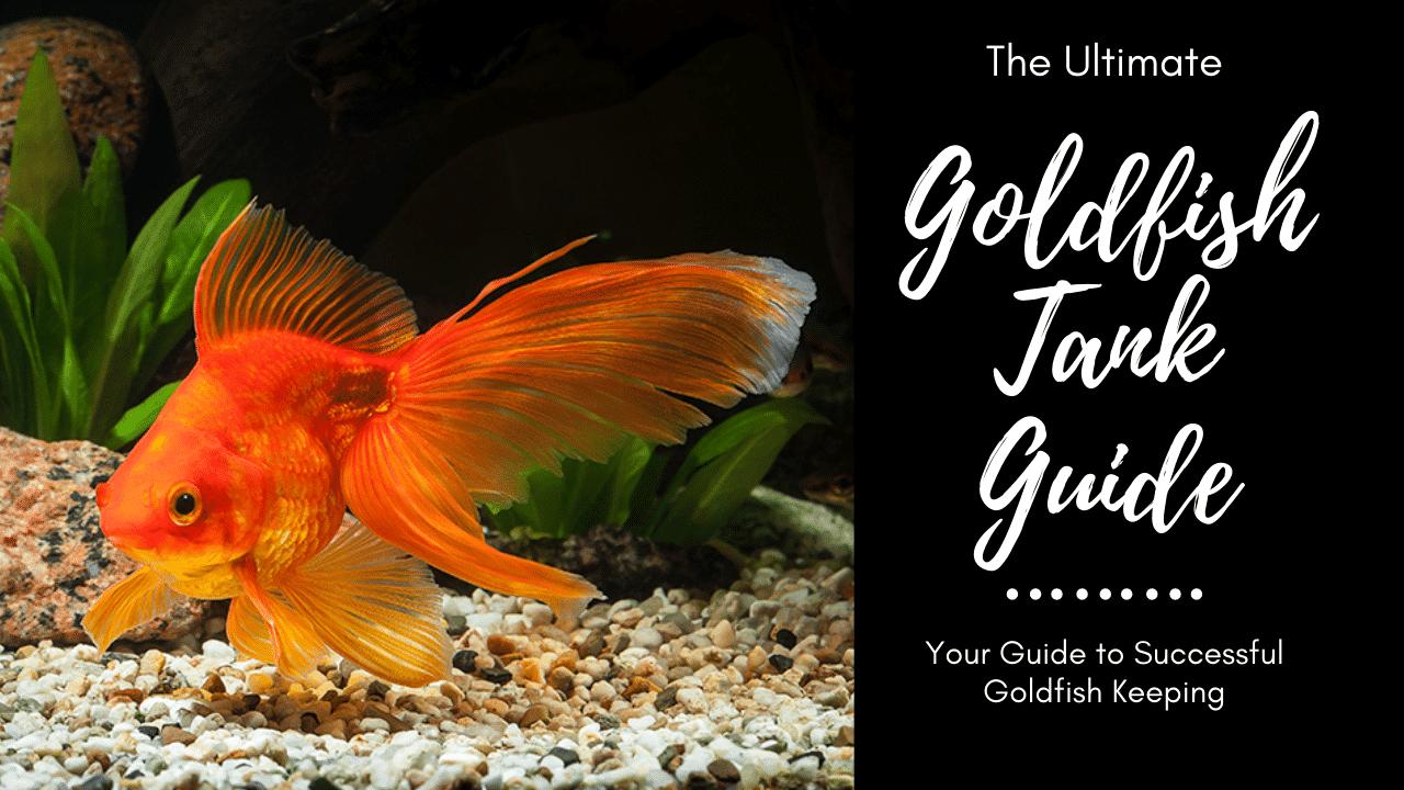 Goldfish Tank Your Guide To Successful Goldfish Care Aquariumstoredepot