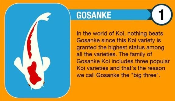 Gosanki Koi