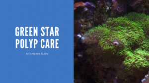 Green Star Polyp Care
