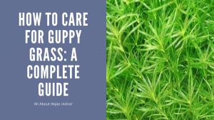 Guppy Grass