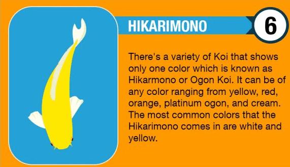 Hikarimono Koi