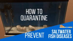 Saltwater Quarantine Tank