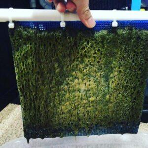 Algae Turf Scrubber for Sale