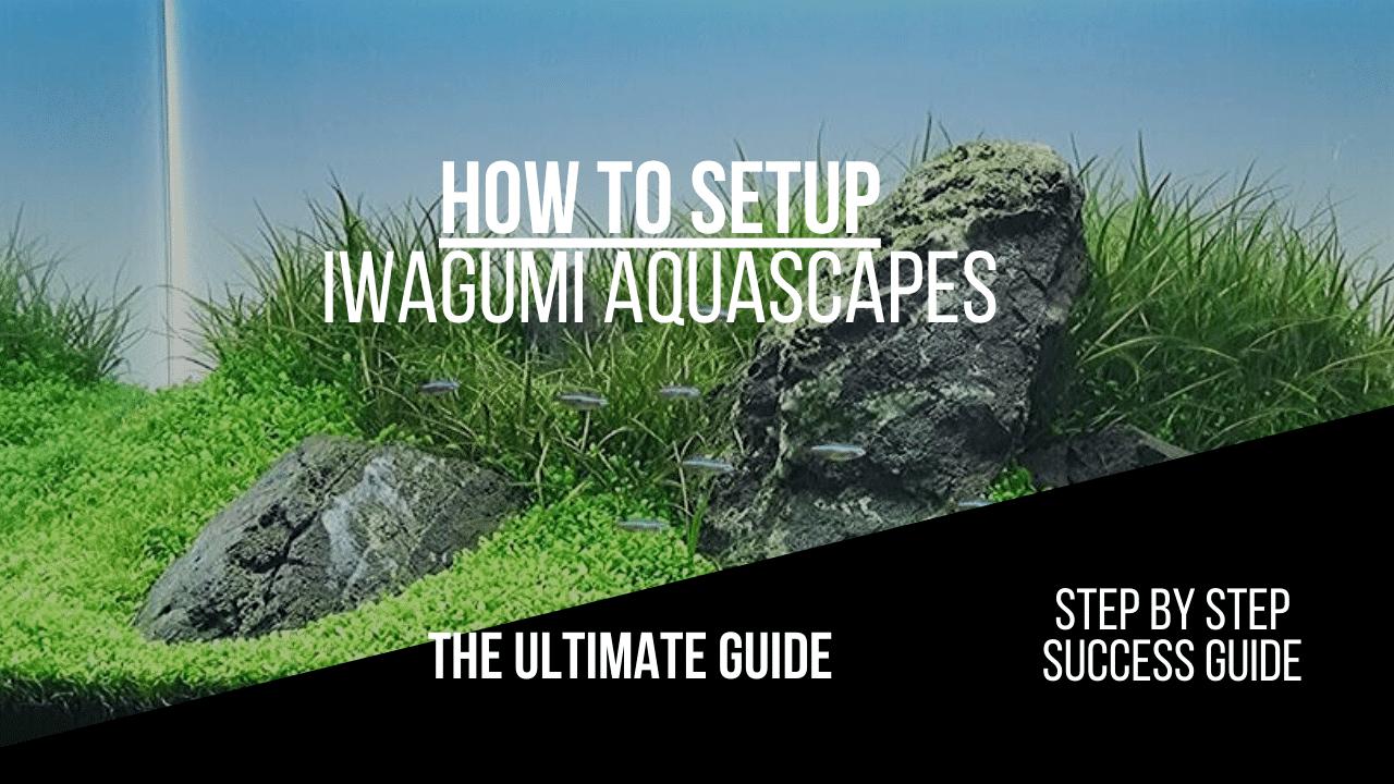 Iwagumi Aquascape How To And Guide Aquariumstoredepot
