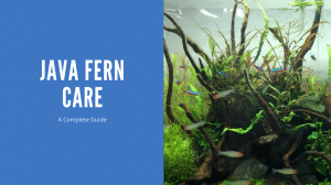Java Fern Care