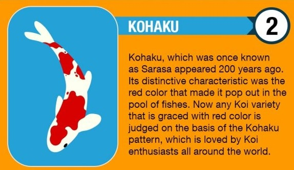 Kohaku Koi