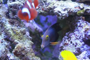 Home Aquarium - The Health Benefits of Owning One