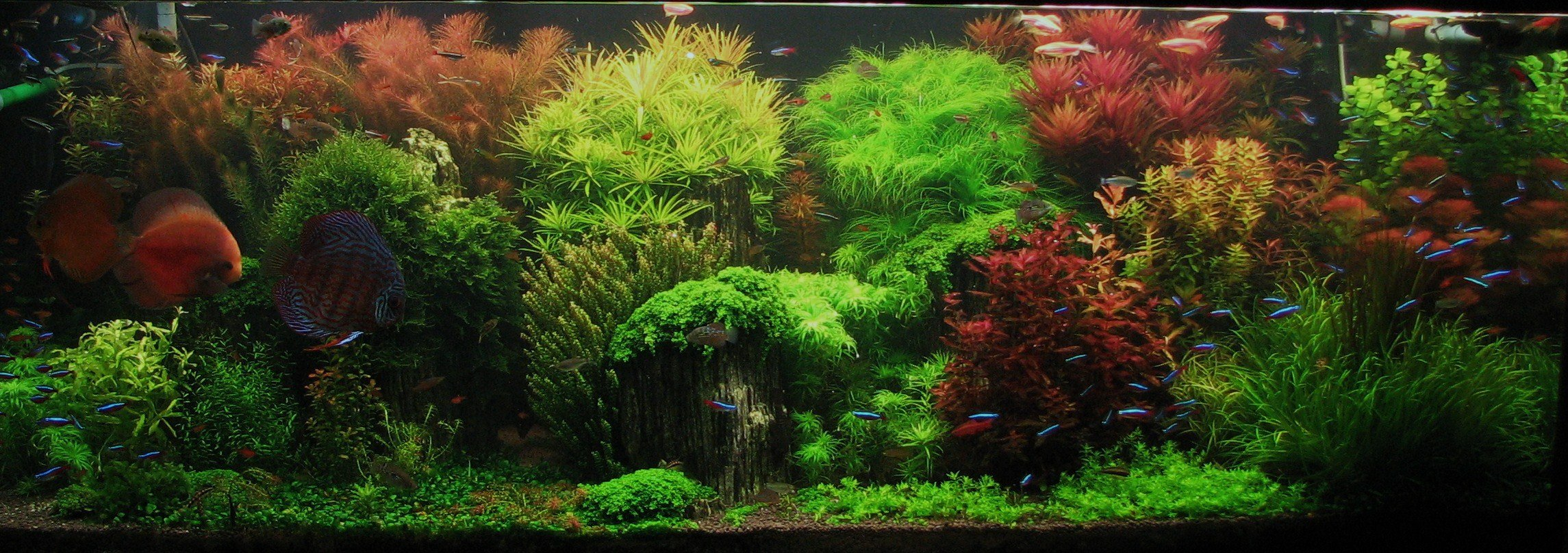 Top 5 Modern Aquascaping Designs For Your Freshwater Fish Aquarium Aquariumstoredepot