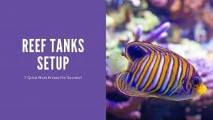 Reef Tanks Setup