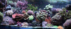 Saltwater Aquarium Selection Guide