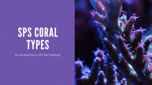 SPS Coral Types