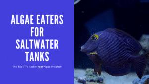 Saltwater Algae Eaters