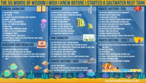 Saltwater Reef Tank - 55 Words of Wisdom I Wish I Knew Before I Started