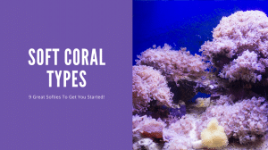 Soft Coral Types