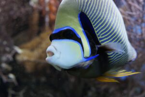Beautiful Fish - Top 10 Most Beautiful Saltwater Fish Available